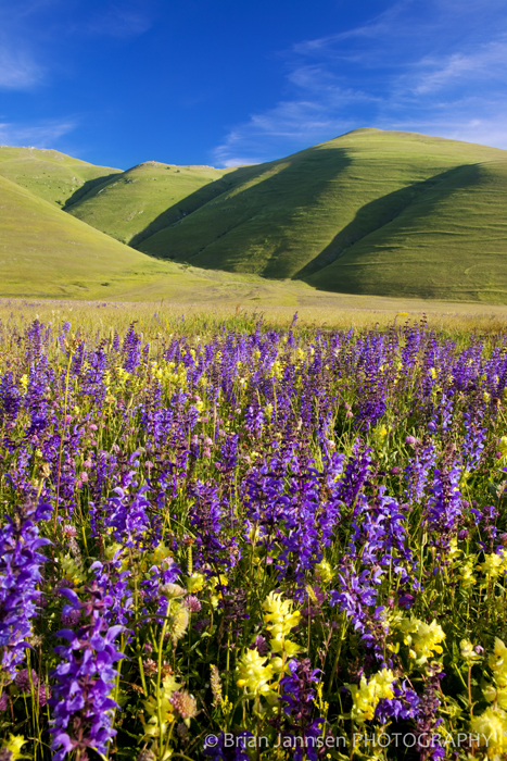 Wildflowers Umbria Italy Piano Grande Castelluccio Photography Workshop Tour